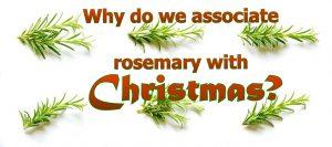 Waarom associëren we rozemarijn met Kerst?